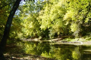 Tiffin_River_at_Goll_Woods_State_Nature_Preserve_in_Ohio