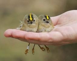 Cute-Birds-5
